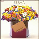 PRISMA EP/Prisma 詳細