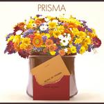 PRISMA/Prisma 詳細